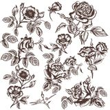 Vector hand drawn rose flowers Stock Image