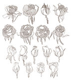 Vector hand drawn roses set. Vector hand drawn graphic isolated roses set Stock Image
