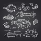 Vector hand drawn seafood elements on black chalkboard set. Illustration of seafood sketch, oyster and shrimp, crab and lobster Stock Photography