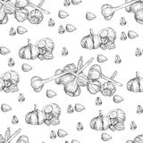 Vector hand drawn seamless pattern of garlic. Stylized black and white sketch of a bundle of garlic groves tied with royalty free illustration