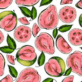Vector hand drawn seamless pattern of isolated guava. Engraved colored art. Delicicous tropical vegetarian objects. Stock Images