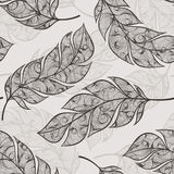 Vector hand drawn seamless patterns with feathers Stock Photos