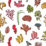 Vector hand drawn seaweed elements pattern or background illustration vector illustration