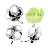 Vector hand drawn set of cotton branches. 100 eco. Cotton flower buds in vintage engraved style. Stock Photo