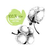 Vector hand drawn set of cotton branches. 100 eco.  Stock Images