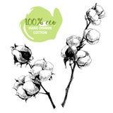Vector hand drawn set of cotton branches. 100 eco.  Stock Photos