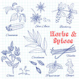 Vector hand drawn set with Dessert Spices. Royalty Free Stock Images