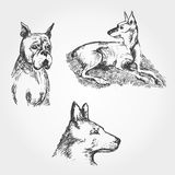 Vector hand drawn Set of dogs Stock Photo