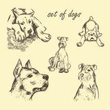 Vector hand drawn Set of dogs Royalty Free Stock Photography
