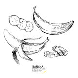 Vector hand drawn set of exotic fruits. Ioslated banana. Engraved art. Delicicous tropical vegetarian objects. Use for restaurant, menu, smoothie bowl, market Royalty Free Stock Images