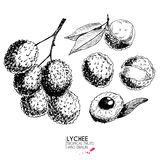 Vector hand drawn set of exotic fruits. Ioslated lyvhee. Engraved art. Delicicous tropical vegetarian objects. Royalty Free Stock Photography
