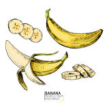 Vector hand drawn set of exotic fruits. Isolated banana. Engraved colored art. Delicicous tropical vegetarian objects. Royalty Free Stock Photo