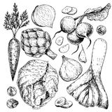 Vector hand drawn set of farm vegetables. Isolated carrot, articoke, leek, radish, cabbage, garlic. Engraved art. Organic sketched objects. restaurant, menu Royalty Free Stock Photography