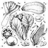 Vector hand drawn set of farm vegetables. Isolated leek. zucchini, chinese cabbage, corn, tomato, garlic. Engraved art. Organic sketched objects. restaurant Royalty Free Stock Images