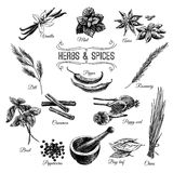 Vector hand drawn set with Herbs Spices Royalty Free Stock Photo