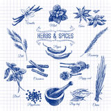 Vector hand drawn set with Herbs Spices. Vintage Stock Photos