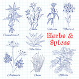 Vector hand drawn set with Herbs and Spices. Royalty Free Stock Photos