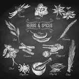 Vector hand drawn set with Herbs Spices. Vintage Stock Photography