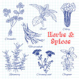 Vector hand drawn set with Herbs and Spices. Royalty Free Stock Image