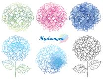 Vector hand drawn set of outline Hydrangea or Hortensia flower bunch in pastel pink and blue isolated on white background. Contour ornamental garden plant stock illustration