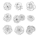Vector hand drawn set of rose, camellia, peony and chrysanthemum flowers outline isolated on the white background. Floral decor. Ation in sketchy style royalty free illustration