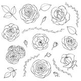 Vector hand drawn set of rose flowers with buds, leaves and thorny stems line art isolated on the white background. Floral collect. Ion of blossoms in sketchy stock illustration