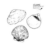 Vector hand drawn set of seafood icons. Isolated clams. Engraved art. Delicious marine food menu sketched objects Royalty Free Stock Photography