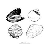 Vector hand drawn set of seafood icons. Isolated clams. Engraved art. Delicious marine food menu sketched objects. royalty free illustration