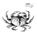 Vector hand drawn set of seafood icons. Isolated crab. Engraved art.. Delicious marine food menu sketched objects Stock Images
