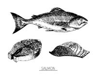 Vector hand drawn set of seafood icons. Isolated salmon. Engraved art.. Delicious marine food menu sketched objects. Use for resaurant, meal, market, store Royalty Free Stock Photos