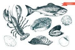 Vector hand drawn set of seafood icons. Lobster, salmon, fillet and clams. Engraved art. Delicious food menu objects. Stock Images