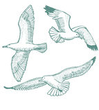 Vector hand-drawn set of seagulls Stock Images