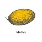 Vector hand-drawn single juicy ripe yellow melon Royalty Free Stock Image