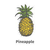 Vector hand-drawn single yellow ripe pineapple Stock Images