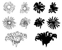 Vector hand drawn sketch daisy black on white stock illustration