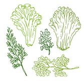 Vector Hand drawn sketch of green food illustration on white background royalty free illustration