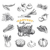 Vector hand drawn sketch Harvest set Royalty Free Stock Photography