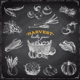 Vector hand drawn sketch Harvest set. Royalty Free Stock Image