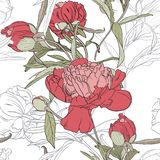Vector hand drawn sketch illustration of pink, white peony flowers and green leaves seamless pattern. Floral white background, backdrop element for fabric vector illustration