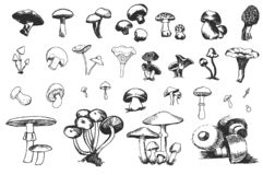 Vector Hand drawn sketch of mushrooms illustration on white background royalty free illustration