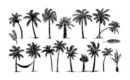 Vector Hand drawn sketch of palm logo illustration on white background stock illustration