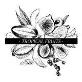 Vector hand drawn smoothie bowls poster. Exotic engraved fruits. Banana, mango, fig, pitaya, acai, lychee, carambola, papaya. Stock Image