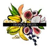 Vector hand drawn smoothie bowls poster. Exotic engraved fruits. Colored icons. Banana, mango, papaya, pitaya, acai Royalty Free Stock Photos