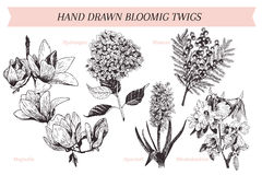 Vector hand drawn spring blossoms poster. Engraved botanical art. Vintage illustration. Mimosa, hyacinth, magnolia, rhododendron,. Hydrangea. Use for wedding vector illustration