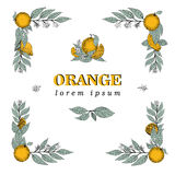 Vector hand drawn square frame elements of leaves and orange fruit. Vintage illustration. Logo template Royalty Free Stock Photos
