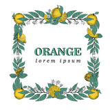 Vector hand drawn square frame of leaves and orange fruit. Vintage illustration. Logo template. Retro banner Royalty Free Stock Photo