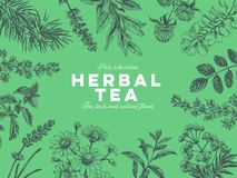 Free Vector Hand Drawn Tea Herb Illustration. Royalty Free Stock Photo - 142353045