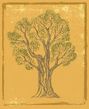 Vector hand drawn Tree Royalty Free Stock Photography