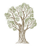 Vector hand drawn Tree Stock Image