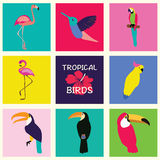 Vector hand drawn Tropical Set of birds. Royalty Free Stock Photography